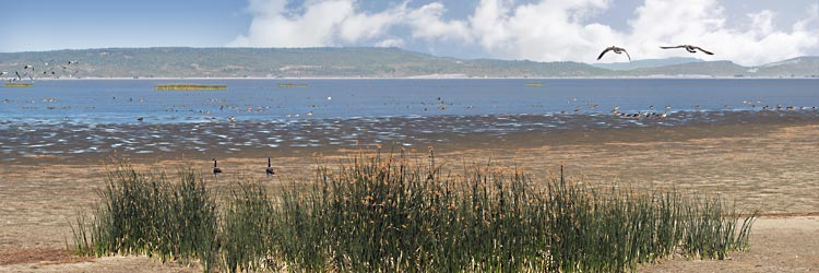 Oregon Basin Range panorama; Freshwater Goose Lake by Lakeview egret, migratory ducks and geese